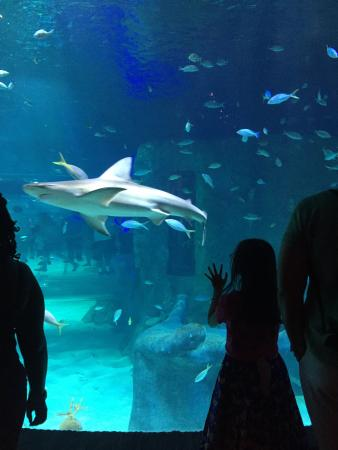 Bild Von Sea Life Orlando Aquarium Orlando