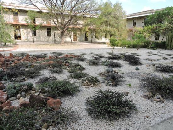Foto de jard n etnobot nico oaxaca vegetaci n for Jardin oaxaca