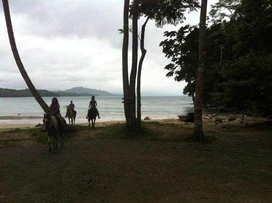 Caribe Horse Riding Club: awesome day with the horses!