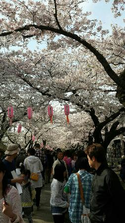 Kitakami Municipal Park Tenshochi