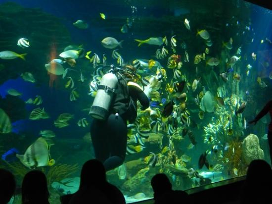 Feeding Fishes Picture Of Ripley 39 S Aquarium Of The