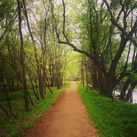 Green Circle Trail: River Pines Trail Segment
