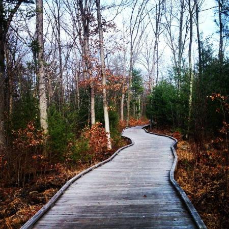 Green Circle Trail: Moses Creek Trail Segment