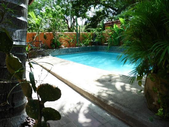 Iguana Inn: poolside