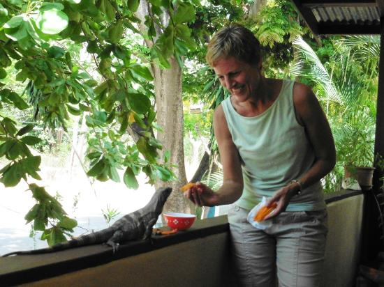 resident iguana at Iguana Inn