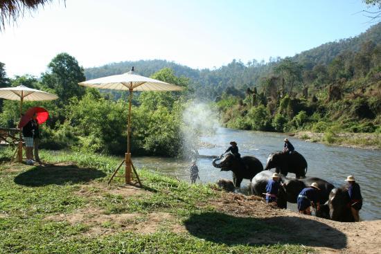 Elephant Life Experience