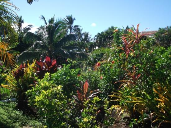 Dorothy's Muri Beach Bungalows: Beautiful Lush Gardens looking down towards beach at back of Bungalow 1