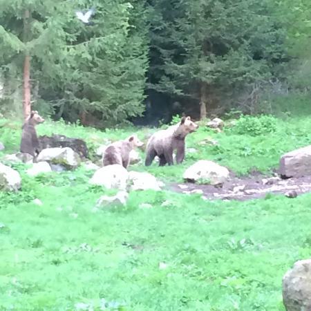 Izvoare, Romênia: bears