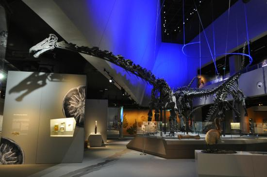 Lee Kong Chian Natural History Museum Review