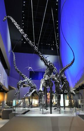 Lee Kong Chian Natural History Museum Review