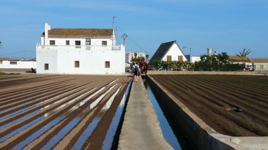 Alboraya, España: Ruta de la chufa a la horchata