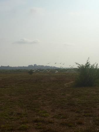 Divar Island Guest House Retreat: Birds spotting