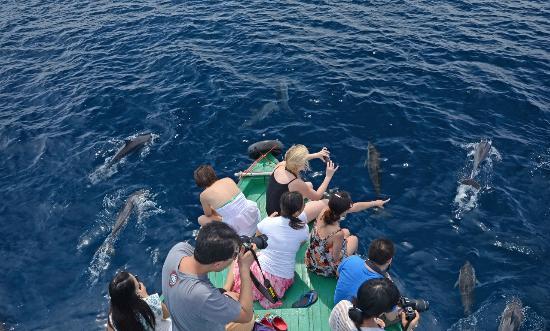 Herathera Island: Dolphin Cruise