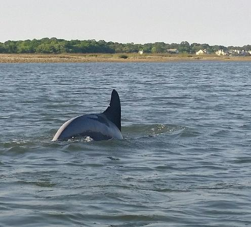 Kayak Hilton Head, Inc.: Great tours with the dolphins.