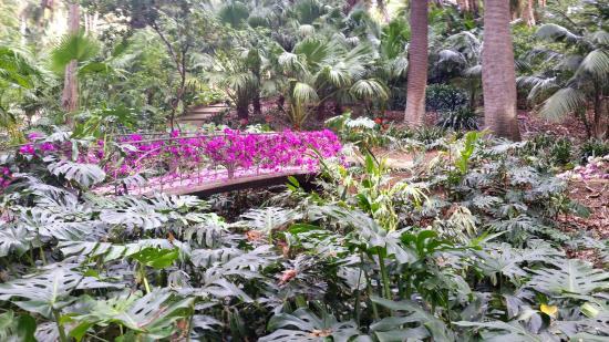 Glicinas picture of la concepcion jardin botanico for Bodas jardin botanico malaga