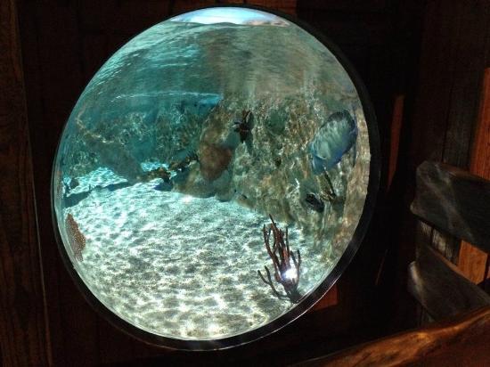 Magnifique aquarium rond picture of aquarium sea life for Aquarium rond
