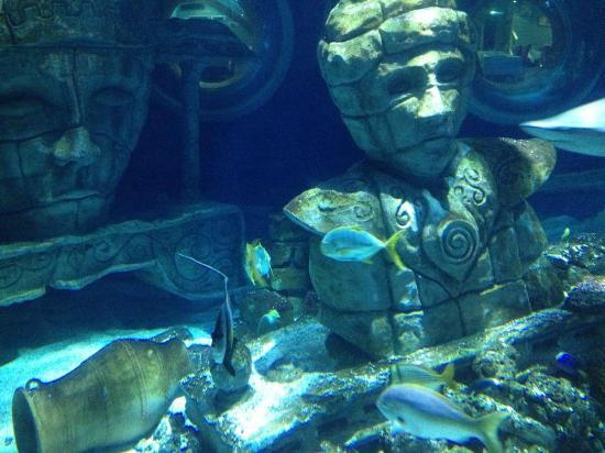 toujours des photos pour les enfants aquarium sea val d europe marne la vallee