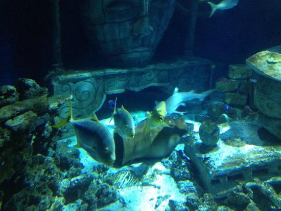 magnifique aquarium rond picture of aquarium sea val d europe marne la vallee