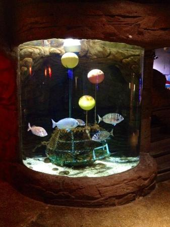 Aquarium rond picture of aquarium sea life paris val d for Grand aquarium rond