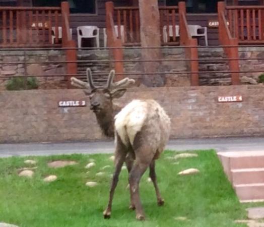 Castle Mountain Lodge: Elk