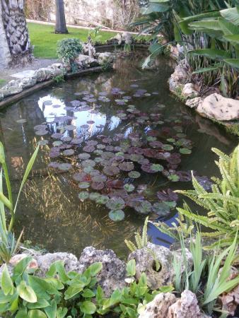 Villa al Alba: Zona del jardín