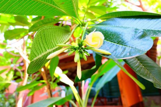 Auberge Sala Inpeng (Mekong Riverside Inn): beautiful place  charming garden