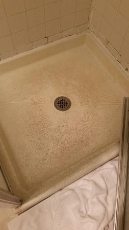 Americas Best Value Inn Missoula: Shower floor--GROSS!!