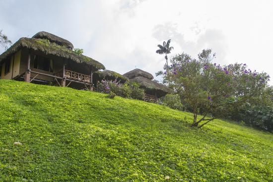 Arasha Tropical Rainforest Resort & Spa: Vista Exterior