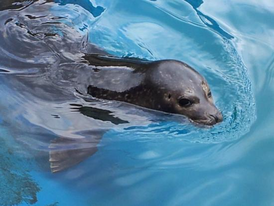 ... seal - Picture of The Scottish SEA LIFE Sanctuary, Oban - TripAdvisor