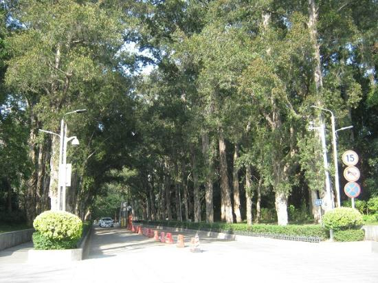 Sun Yat-sen University : Tree Lined Grounds
