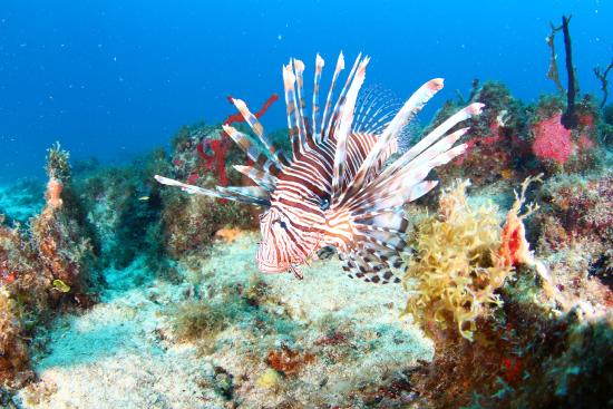 bahía de Simpson, St. Maarten: photos taken by ocean explorers on our dive in may