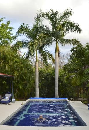 Orchid Tree : spectacular setting - the pool felt great after a stressful drive