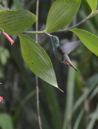 Chalet Nicholas: more bird watching