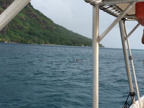 Mahana Dive : Dolphins (april 2015)
