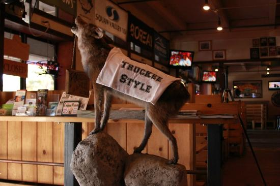 Blue Coyote Bar Grill The Mascot Of Restaurant