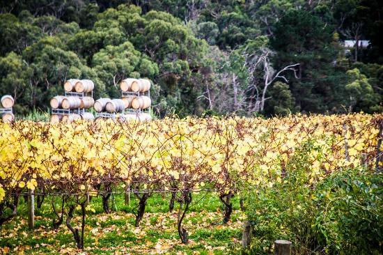 Wine & Food Lovers' Tours: Paringa Estate