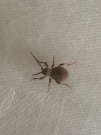 Zhaxidele Hotel: What is that crawling up the wall in our room?