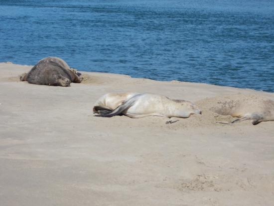 Surat Bay: Taking it easy