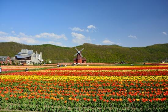 Tulip Park : 風車があってオランダにいるような雰囲気です