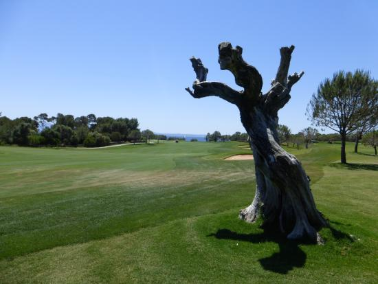 Alcanada Golf Club : Beautifully maintained!