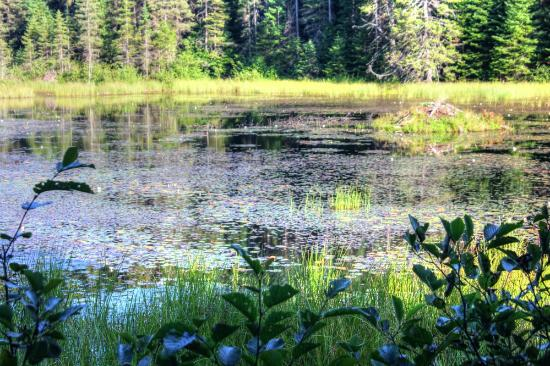 Beaver Pond Trail: One of their ponds