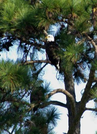 Kayak Hilton Head, Inc.: Local birds on tour