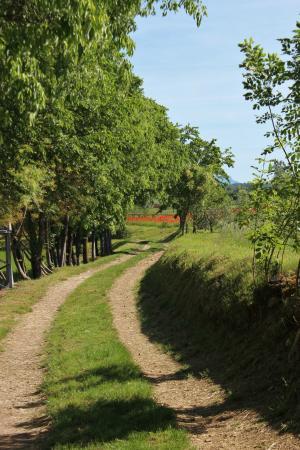 Agriturismo Macesina : La strada appena fuori..con i papaveri