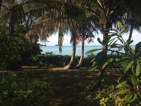 Villa Corallina Moorea: Our every day view
