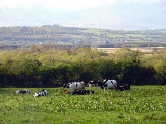 Murphy's Farmhouse: Pasture area !