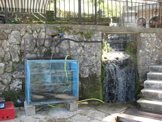 Libohove, Albania: fresh trout