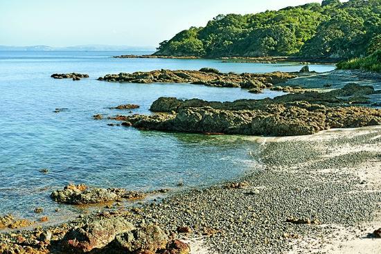 Tiritiri Matangi Island: Hobbs Beach Track view