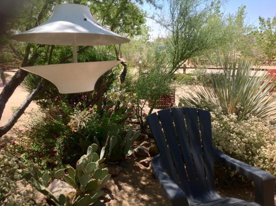 Spin and Margie's Desert Hideaway: The desert garden
