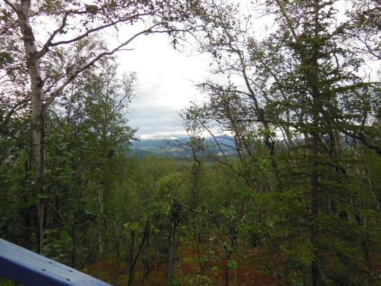 Ridgetop Cabins: view from porch