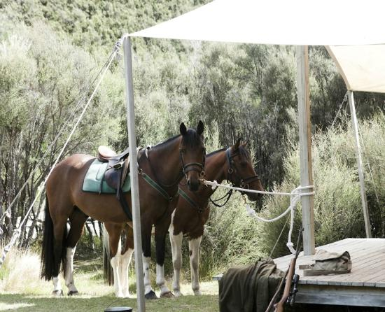 Poronui: Explore the property on horseback with a streamside lunch at Safari Camp